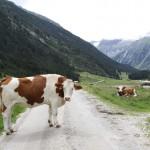 Dolinami pod szczytami Alp- 14