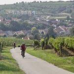 Morawskie winne ścieżki- 103