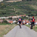 Morawskie winne ścieżki- 118