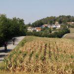 Morawskie winne ścieżki- 123