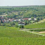 Morawskie winne ścieżki- 11