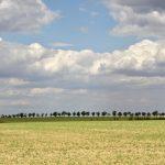 Morawskie winne ścieżki- 129