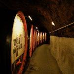Morawskie winne ścieżki- 12