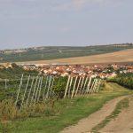 Morawskie winne ścieżki- 23