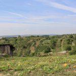 Morawskie winne ścieżki- 34