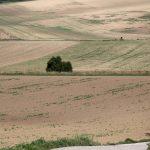 Morawskie winne ścieżki- 41