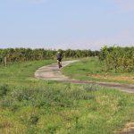 Morawskie winne ścieżki- 43