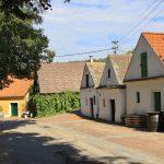 Morawskie winne ścieżki- 48