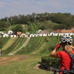 Morawskie winne ścieżki- 51