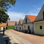 Morawskie winne ścieżki- 82