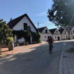 Morawskie winne ścieżki- 83