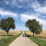 Morawskie winne ścieżki- 86