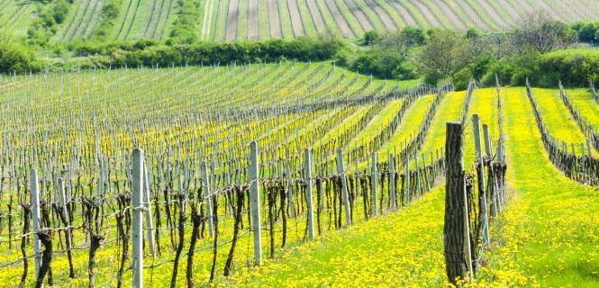 podróż rowerowa Wiosenne winne ścieżki
