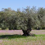 Portugalia - Siła w Spokoju (wiosną)- 48