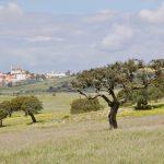 Portugalia - Siła w Spokoju (wiosną)- 72