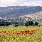 Albania (jesienią)- 208