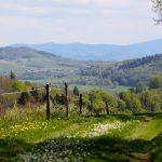 Dolina Pałaców i Ogrodów- 42